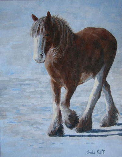 clydesdale, horse